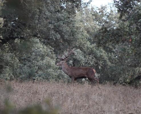 deer06