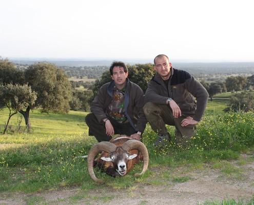 mouflon01