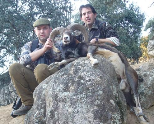 mouflon03