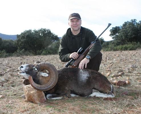 mouflon04